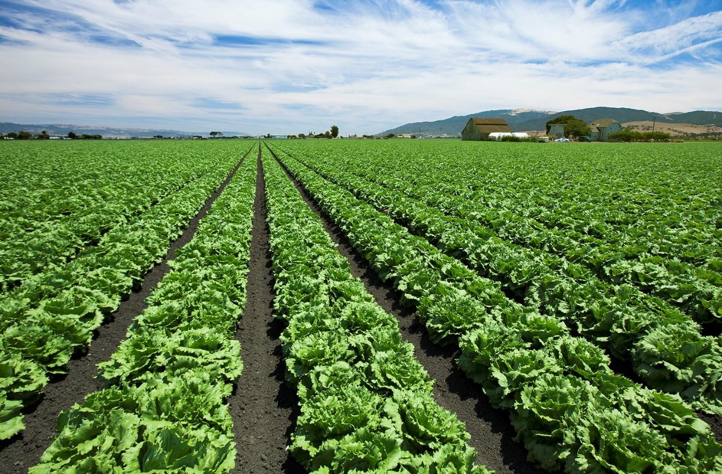 Diseases of vegetable crops in australia pdf